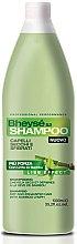 Духи, Парфюмерия, косметика Шампунь для сухих волос - Renee Blanche Shampoo Dry Hair