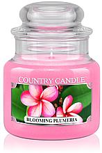 "Духи, Парфюмерия, косметика Ароматическая свеча ""Цветущая плюмерия"" (банка) - Country Candle Blooming Plumeria"