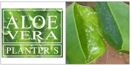 Маска для объема волос с алоэ вера - Planter's Volumizing Compress pack with Aloe Vera — фото N3